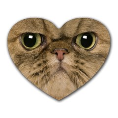 Cute Persian Cat Face In Closeup Heart Mousepads