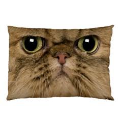 Cute Persian Cat Face In Closeup Pillow Case