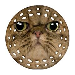 Cute Persian Cat face In Closeup Ornament (Round Filigree)