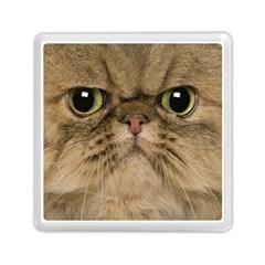 Cute Persian Cat Face In Closeup Memory Card Reader (square)
