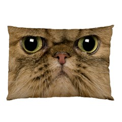 Cute Persian Cat Face In Closeup Pillow Case (two Sides)