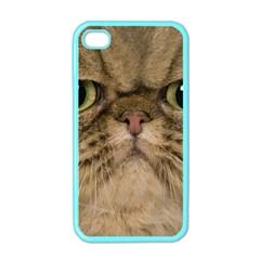 Cute Persian Cat face In Closeup Apple iPhone 4 Case (Color)