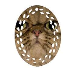 Cute Persian Cat Face In Closeup Oval Filigree Ornament (two Sides)