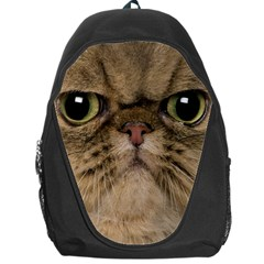 Cute Persian Cat Face In Closeup Backpack Bag