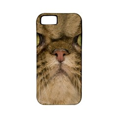 Cute Persian Cat Face In Closeup Apple Iphone 5 Classic Hardshell Case (pc+silicone)
