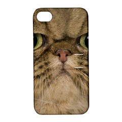Cute Persian Cat face In Closeup Apple iPhone 4/4S Hardshell Case with Stand