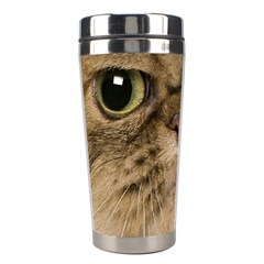 Cute Persian Cat Face In Closeup Stainless Steel Travel Tumblers
