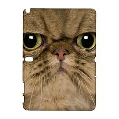 Cute Persian Cat Face In Closeup Galaxy Note 1