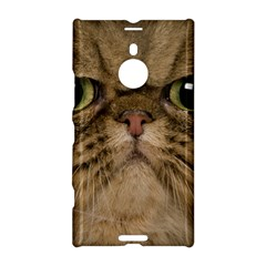 Cute Persian Cat Face In Closeup Nokia Lumia 1520