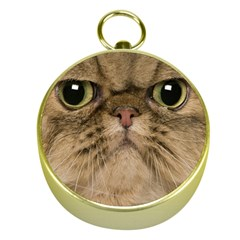 Cute Persian Cat Face In Closeup Gold Compasses