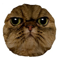 Cute Persian Cat Face In Closeup Large 18  Premium Flano Round Cushions