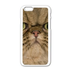 Cute Persian Cat face In Closeup Apple iPhone 6/6S White Enamel Case