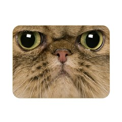 Cute Persian Cat face In Closeup Double Sided Flano Blanket (Mini)