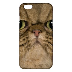 Cute Persian Cat face In Closeup iPhone 6 Plus/6S Plus TPU Case