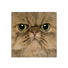 Cute Persian Cat Face In Closeup Satin Bandana Scarf