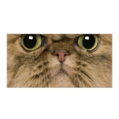 Cute Persian Cat Face In Closeup Satin Wrap