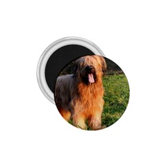 Full Briard 1.75  Magnets