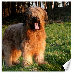 Full Briard Canvas 16  x 16