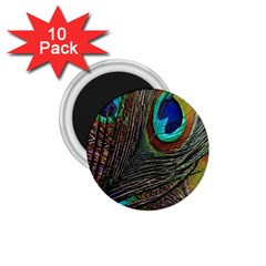 Peacock Feathers 1 75  Magnets (10 Pack)