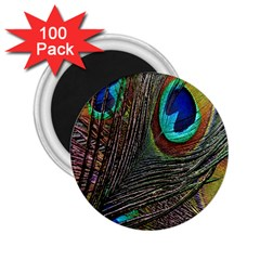 Peacock Feathers 2 25  Magnets (100 Pack)