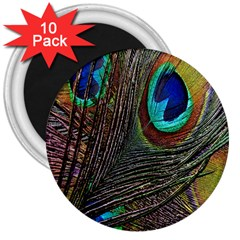 Peacock Feathers 3  Magnets (10 pack)
