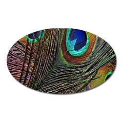 Peacock Feathers Oval Magnet
