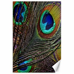 Peacock Feathers Canvas 20  x 30