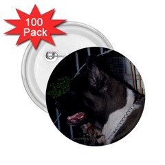 Akita second 2.25  Buttons (100 pack)