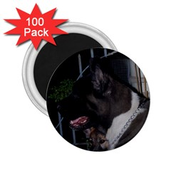 Akita second 2.25  Magnets (100 pack)