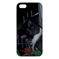 Akita second iPhone 5S/ SE Premium Hardshell Case