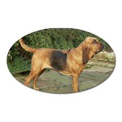 Bloodhound Black And Tan Full Oval Magnet