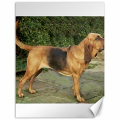Bloodhound Black And Tan Full Canvas 12  x 16