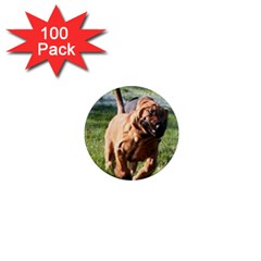 Bloodhound Running 1  Mini Magnets (100 pack)