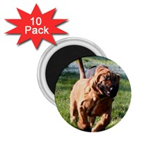 Bloodhound Running 1.75  Magnets (10 pack)