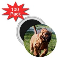 Bloodhound Running 1.75  Magnets (100 pack)