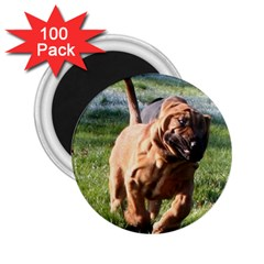 Bloodhound Running 2.25  Magnets (100 pack)