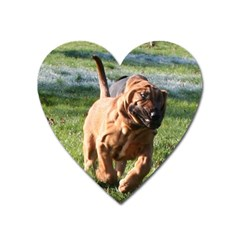 Bloodhound Running Heart Magnet