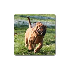 Bloodhound Running Square Magnet