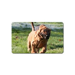 Bloodhound Running Magnet (Name Card)