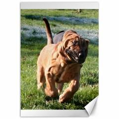 Bloodhound Running Canvas 12  x 18