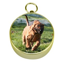 Bloodhound Running Gold Compasses