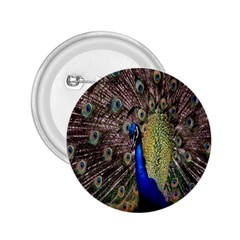 Multi Colored Peacock 2.25  Buttons