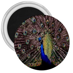 Multi Colored Peacock 3  Magnets