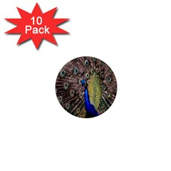 Multi Colored Peacock 1  Mini Magnet (10 Pack)