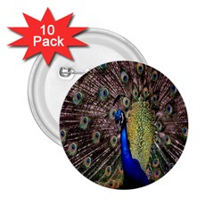 Multi Colored Peacock 2 25  Buttons (10 Pack)