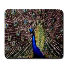 Multi Colored Peacock Large Mousepads