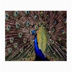 Multi Colored Peacock Small Glasses Cloth