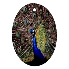 Multi Colored Peacock Oval Ornament (Two Sides)