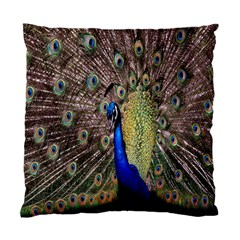Multi Colored Peacock Standard Cushion Case (Two Sides)