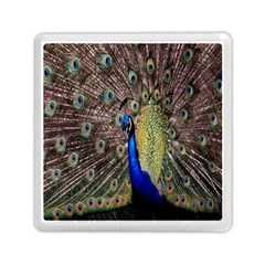 Multi Colored Peacock Memory Card Reader (square)